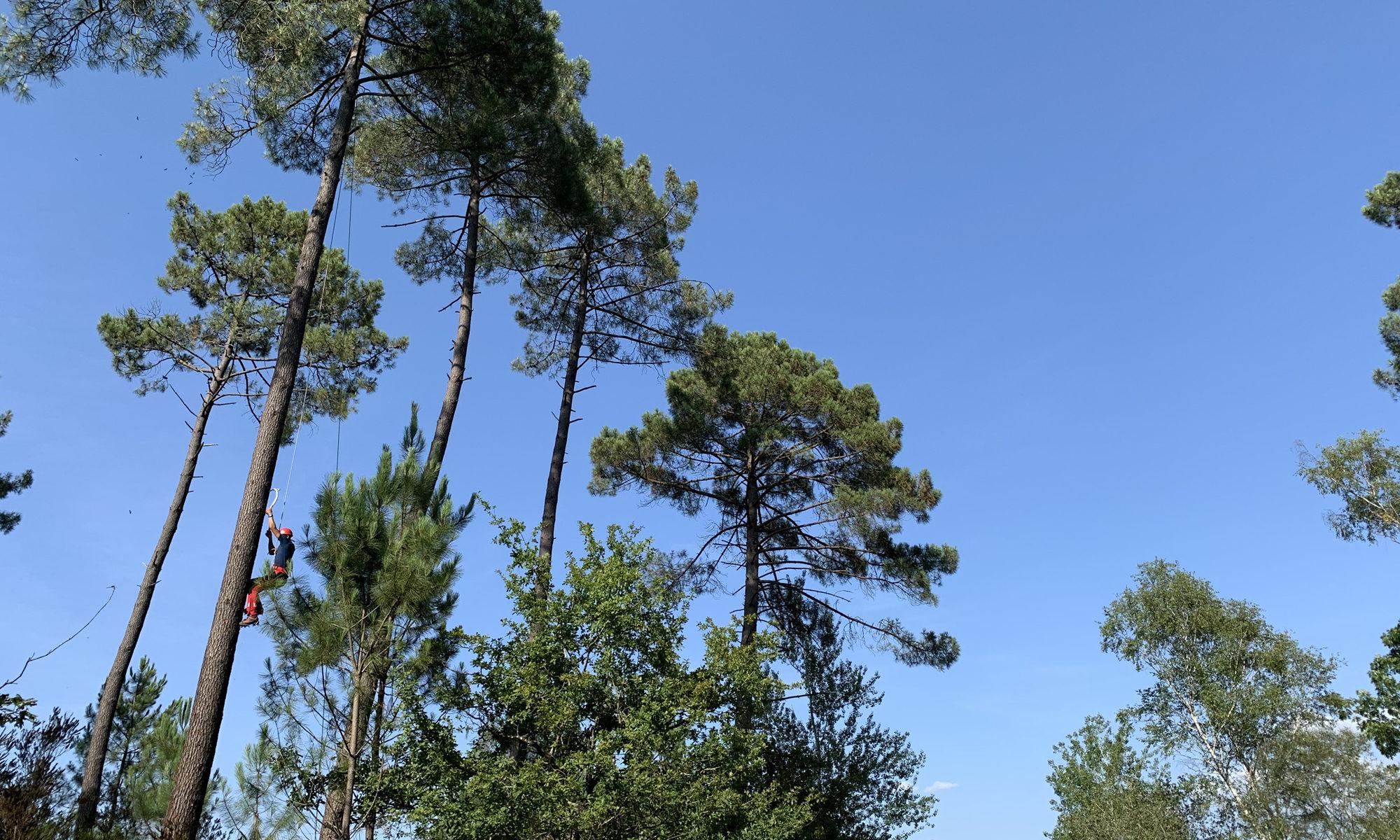 Cascade de bois - Woodclimb